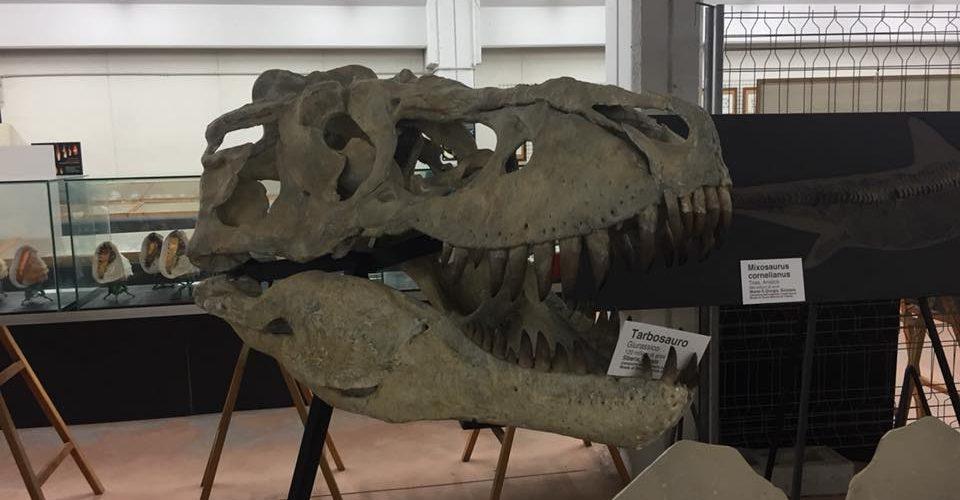 dinosauri nelle marche