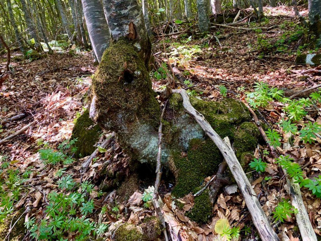 bosco località tre caciare