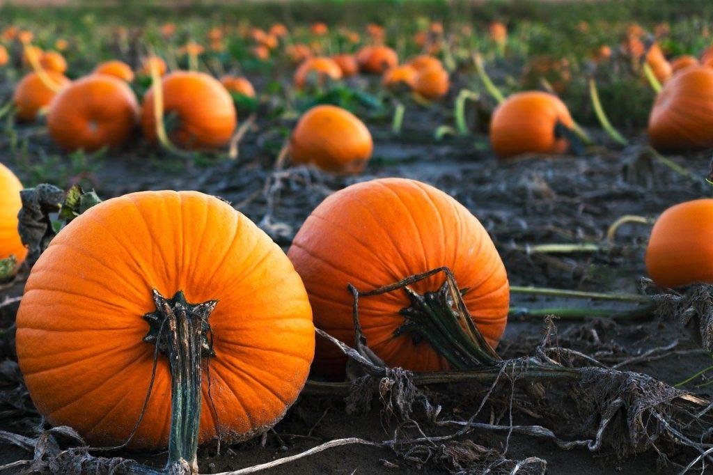 giardini delle zucche nelle marche pumpkins patch